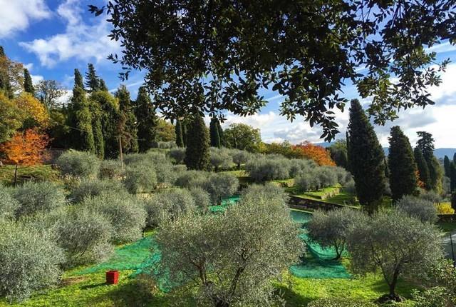 oliveraie breil sur roya