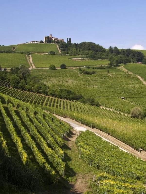 Vignoble de Barolo